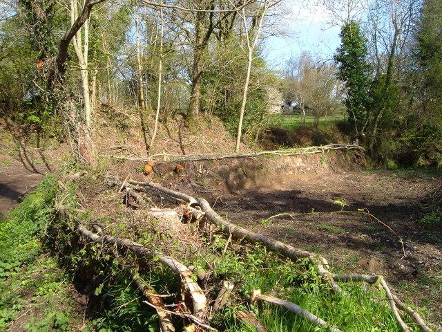 Hedge-laying near Peck Farm