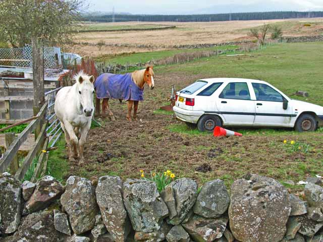 Car and horse