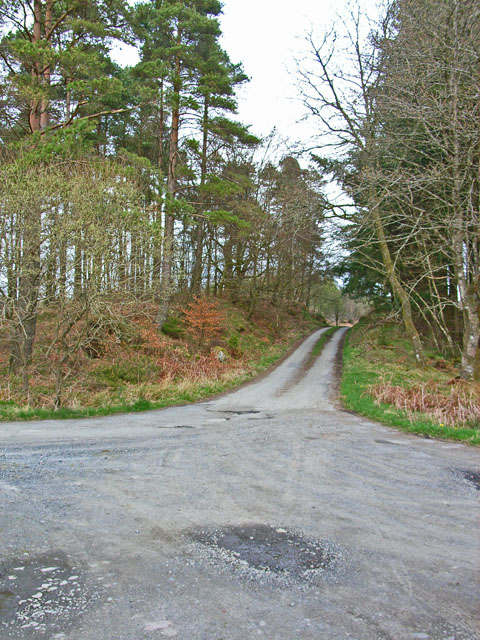 End of the tarmac, Penninghame Forest