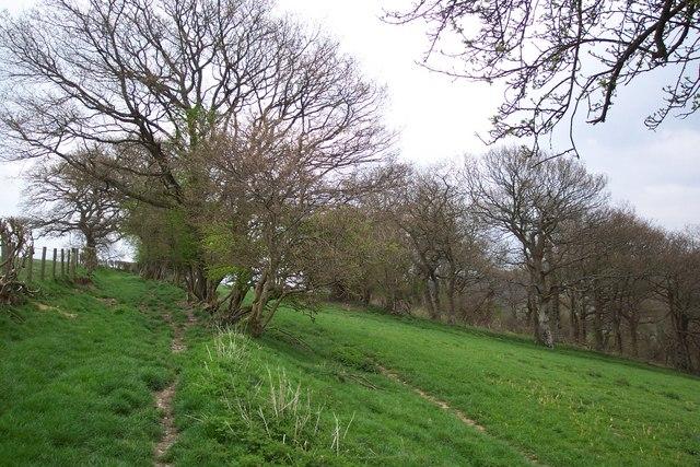 Bridleway south of Hergest Ridge