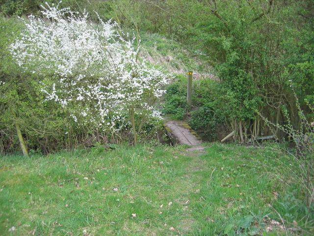 Footbridge and blossom