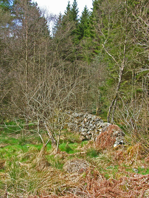 Old field wall in Penninghame Forest