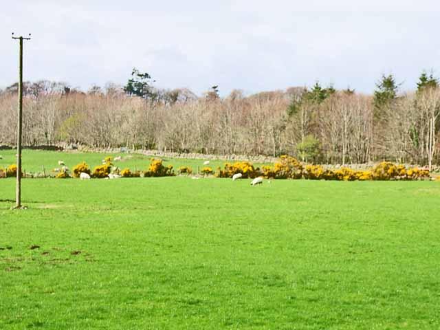 Field near Benfield