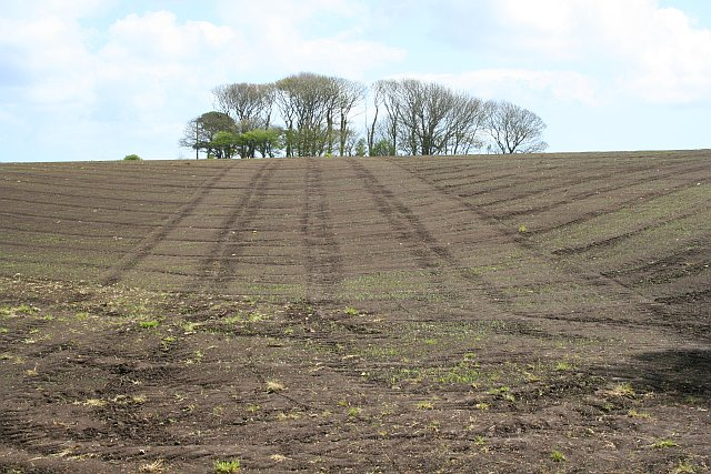 Sown and Rolled