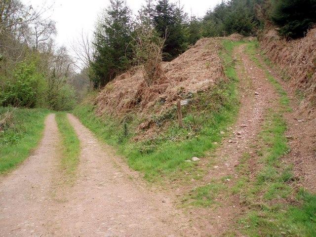 Bridleway to Slowley Wood.