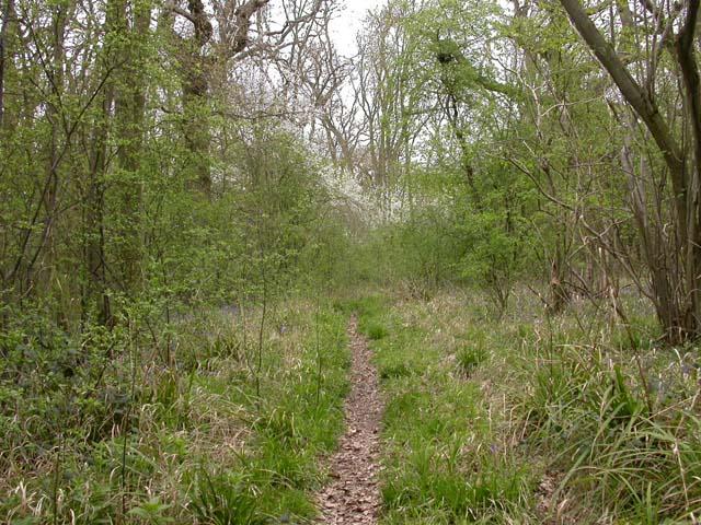 Footpath through the Wood.