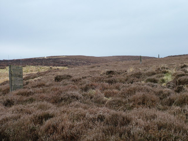 Grouse butts on the ranges?