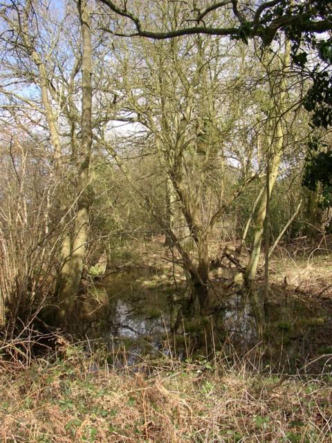 Roadside wood and pond, Peper Harow