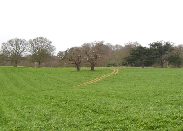 Parkland trees, Peper Harow