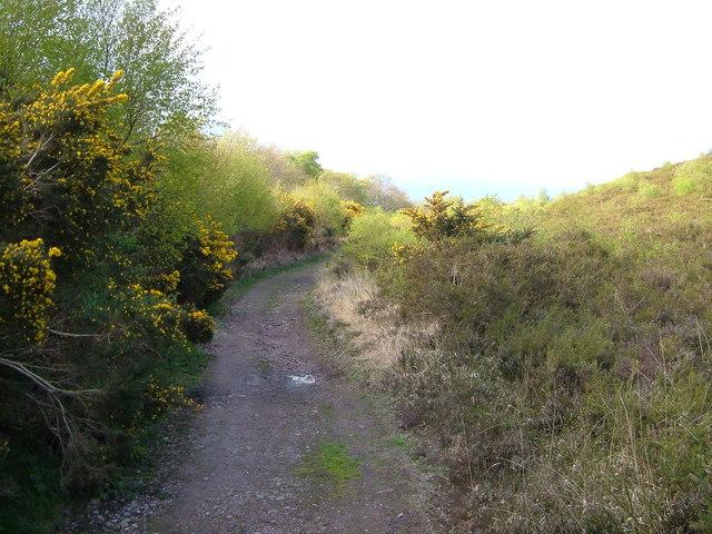 East Devon Way below Woodbury Common