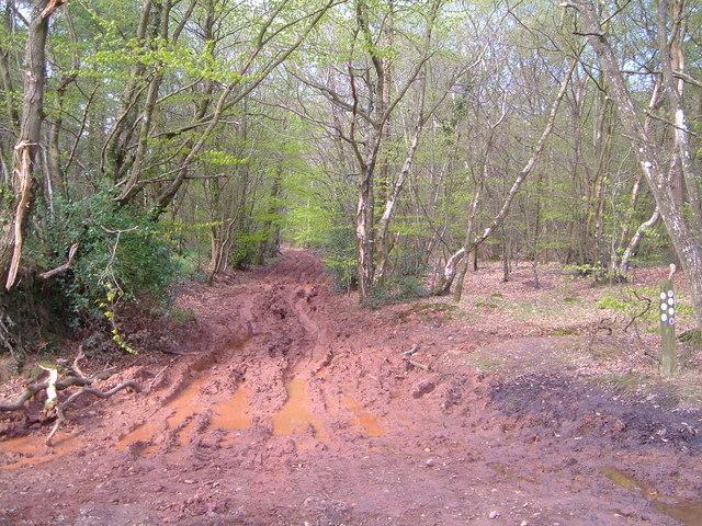 East Devon Way in Rushmoor Wood