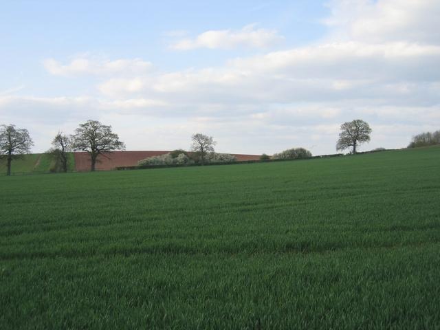 Farmland, Coughton
