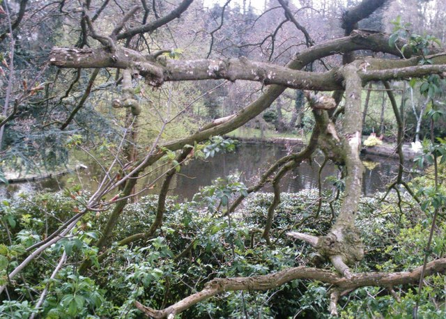 Lower Mill Pool, Cuddington