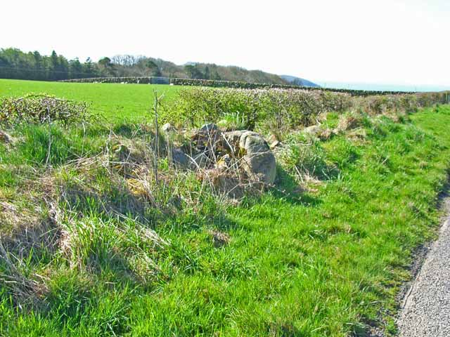 Field boundaries - wall and hedge