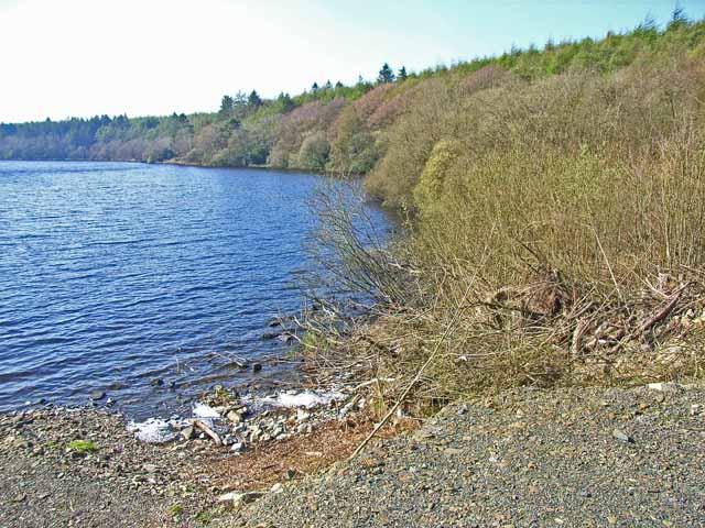 Whitefield Loch, near Glenluce