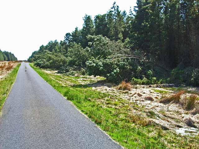 Storm damage in Mindork Forest