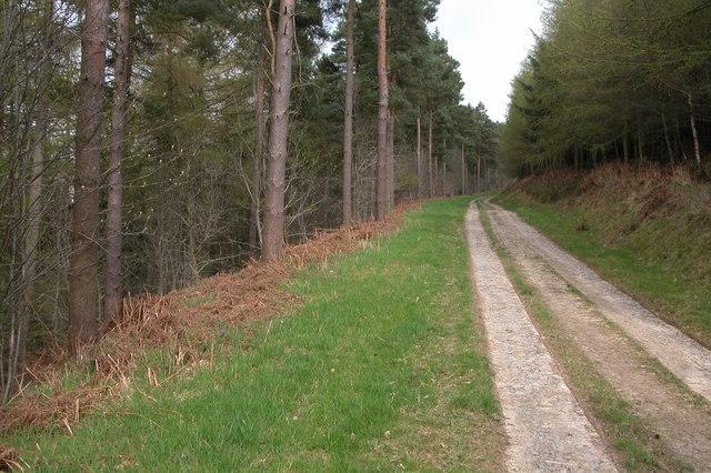 Track through Sowdley Wood