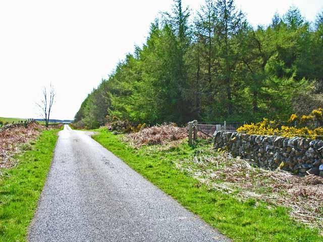 Roadside plantation