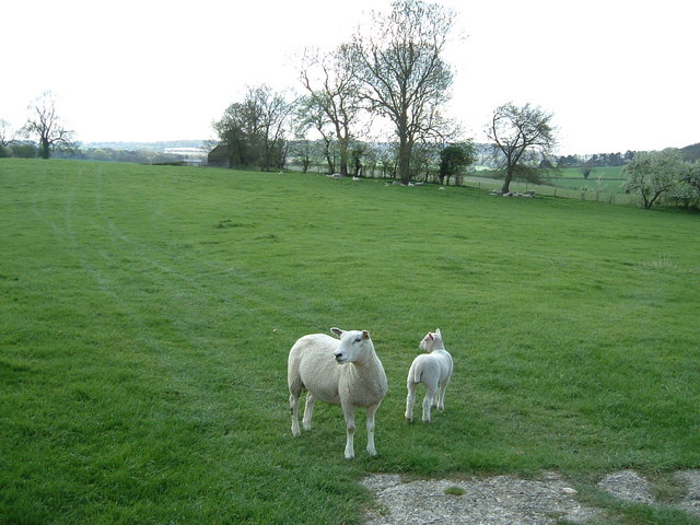 Who ewe looking at ?