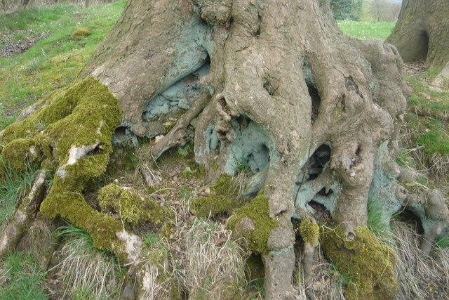 Lichen and moss on tree roots