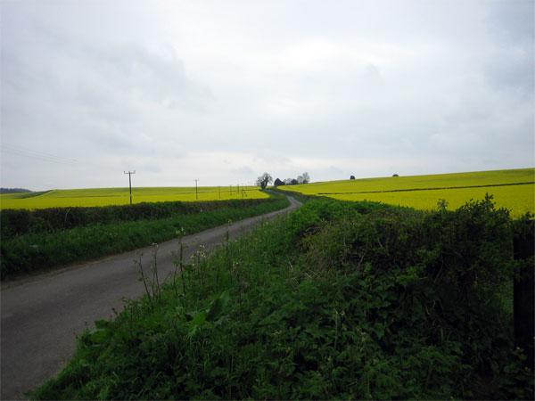 Oilseed rape near Winterborne Anderson