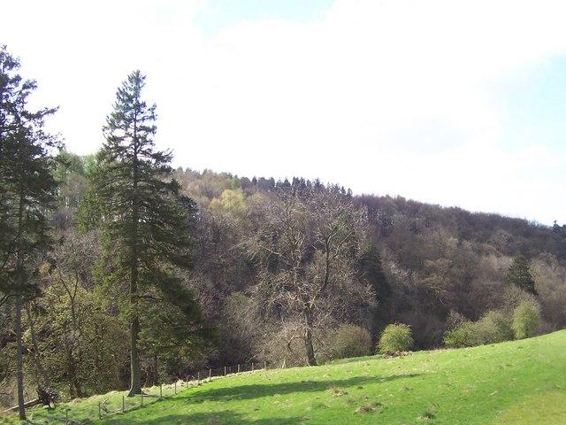 Horse Holme Wood