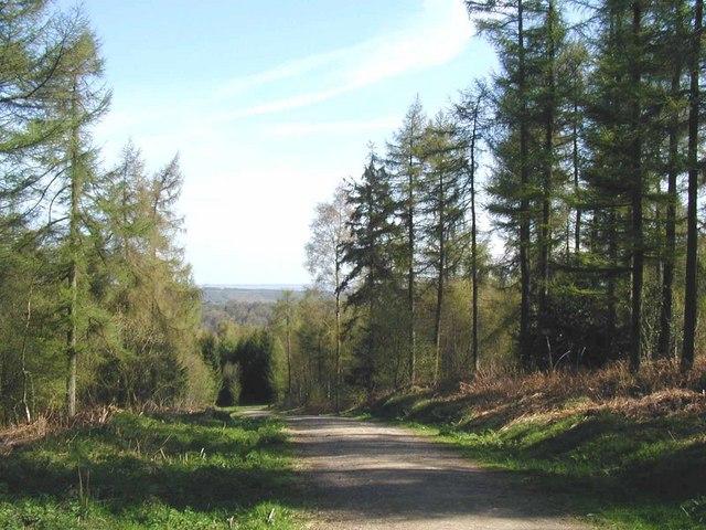 Yearsley Woods