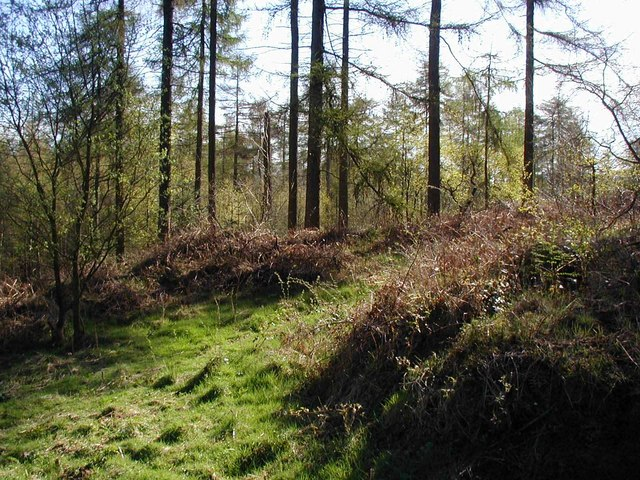 Typical woodland scene