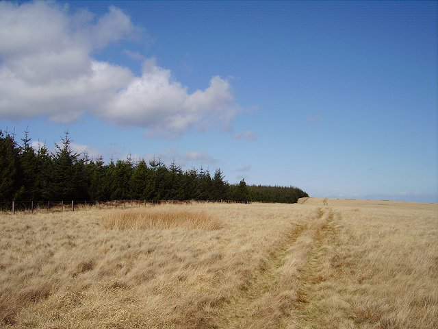 Lamb Hill,  forest edge
