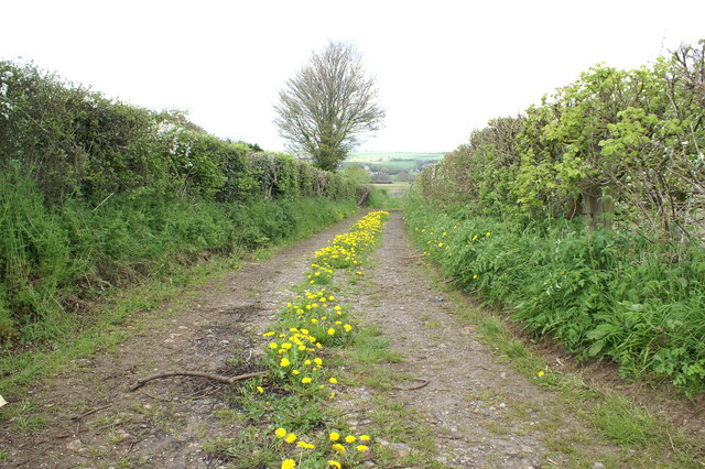 Dandelion Track