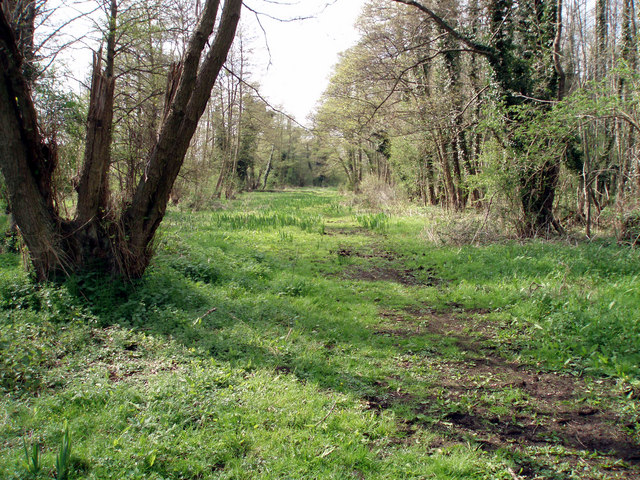 Flordon Common