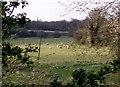 TM1797 : Sheep graze in Hapton viewed from Marsh Lane. by Adrian Hodge