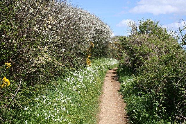 Coast Path near Maenporth