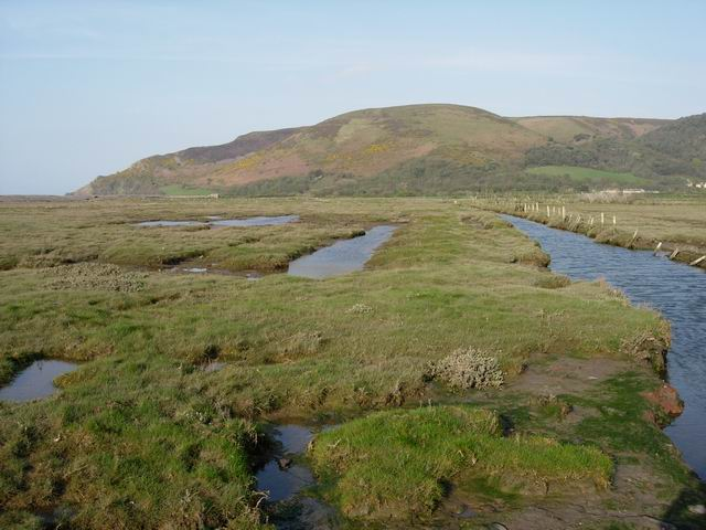 Porlock Saltings