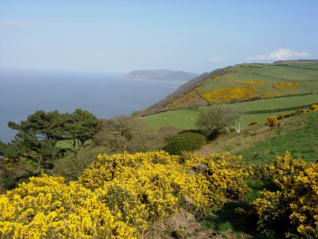 Exmoor Coastal View