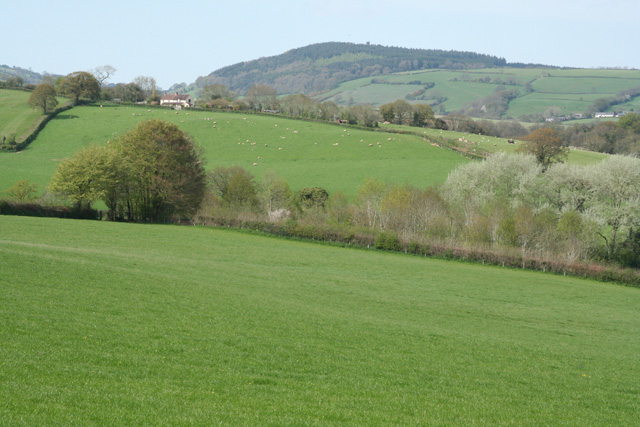 Fitzhead: towards Pitsford Hill