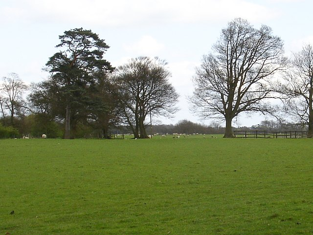 Pasture on Stede Hill