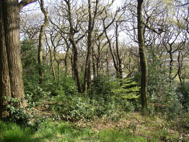 Fairbank Wood, Baildon