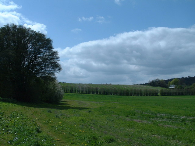 Noar hill near Selborne