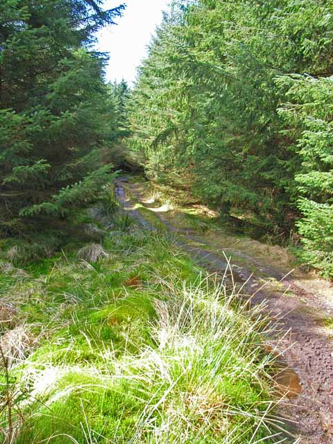 Track to Loch Ree