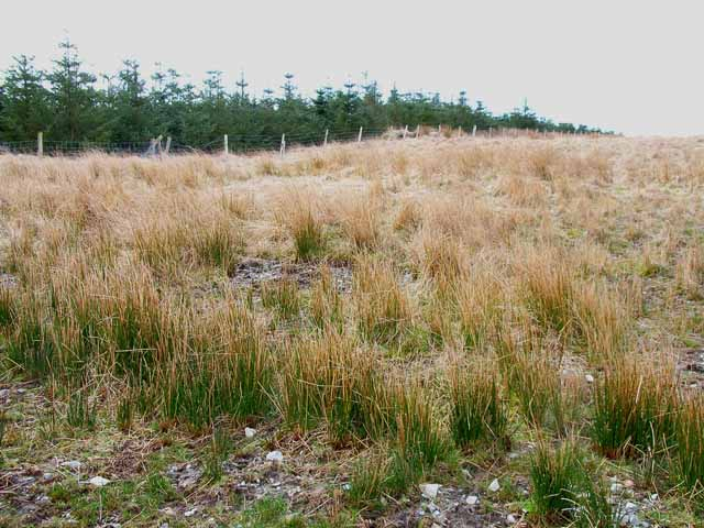 Moorland and shelter belt