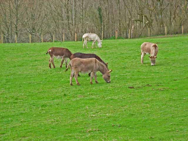 Donkeys at Balmesh