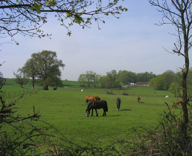 Grazing horses - Great Warley