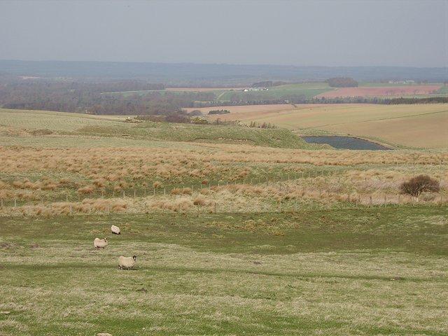 Farmland beneath Newlands Hill.