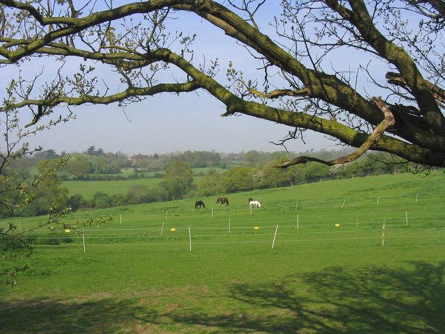 Horse Paddocks, Great Warley