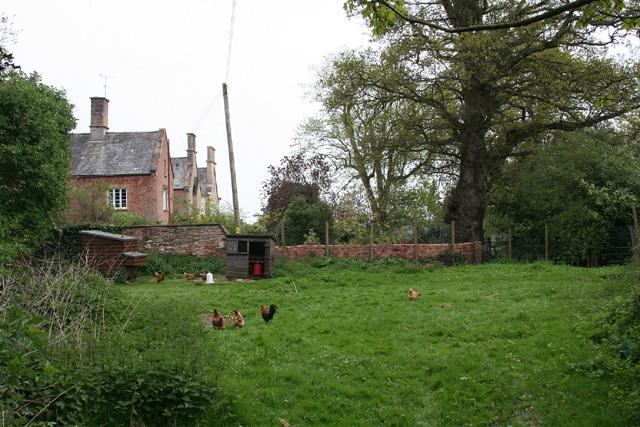 Norton Fitzwarren: free range at Monty's Court