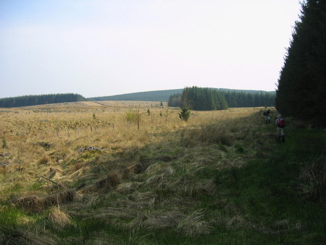 Clearing in Wark Forest