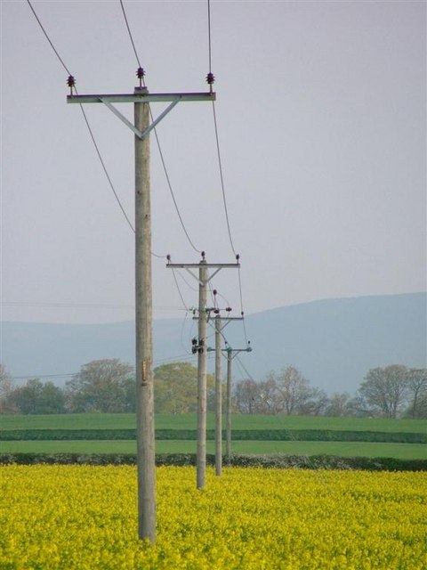 Electricity Poles, Field of Rape