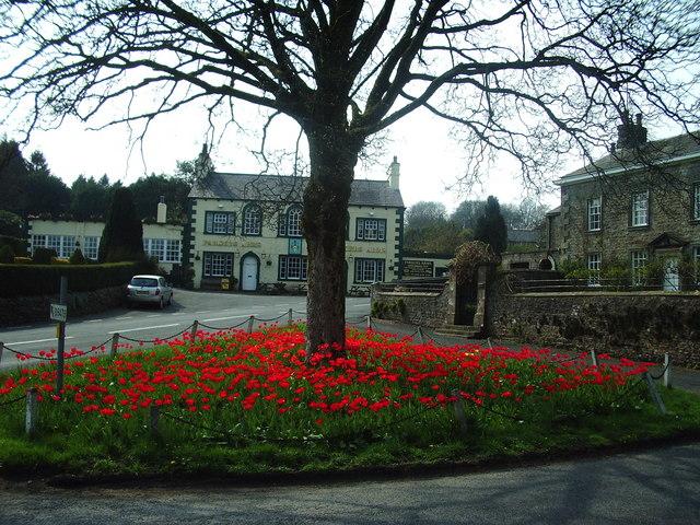 Tulips, Newton-in-Bowland