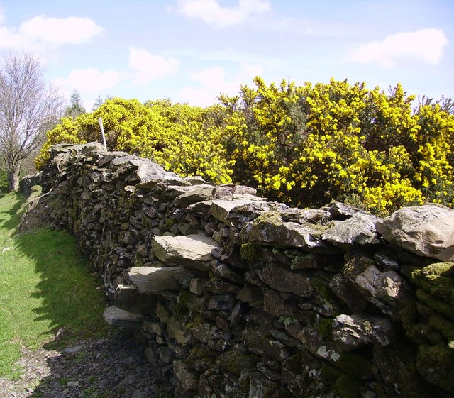 Wall Stile and Gorse